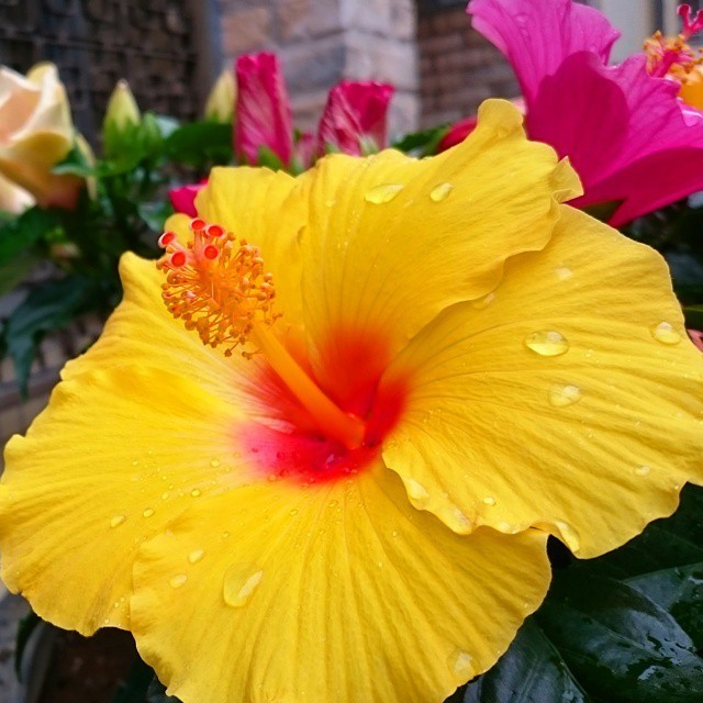 ハワイアンネイルをフットにも♪足元からリゾート気分を楽しむ!