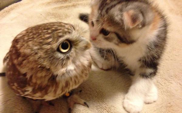 フクロウとニャンコの赤ちゃんがキス!可愛すぎるコンビが話題に