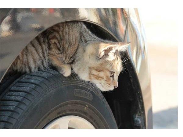 ちょっとした思いやりで救える命、日産が「#猫バンバン プロジェクト」を開始!特設サイトも