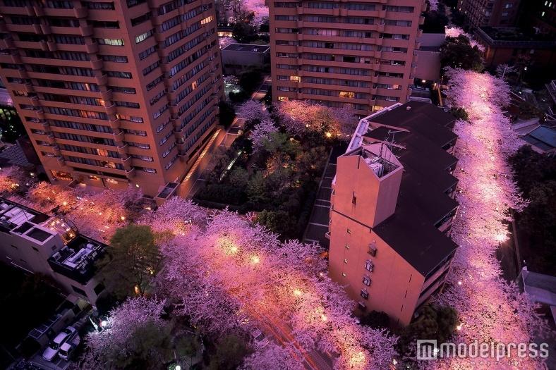 桜の下でお花見デート 彼と歩きたい東京のお花見スポット7選