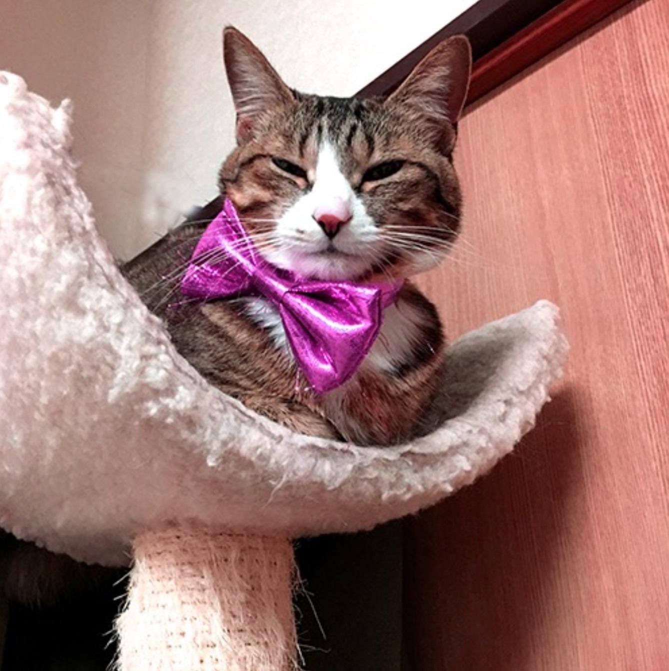 猫ライターの週末新作映画情報