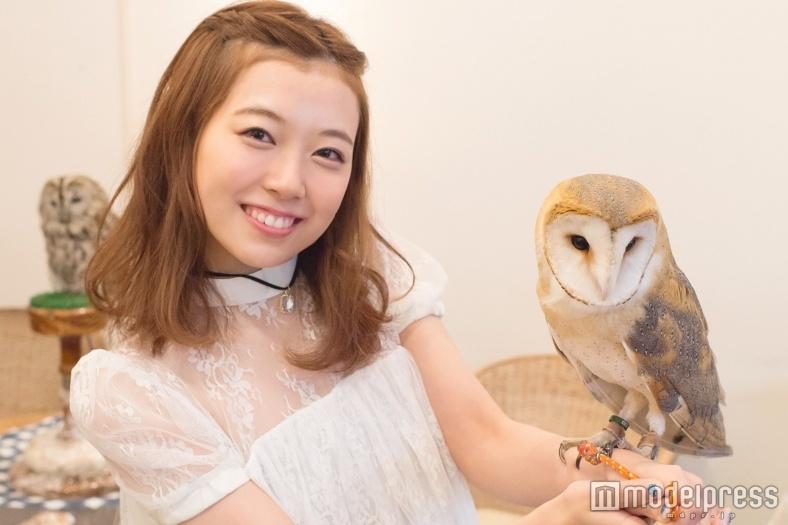 フクロウのニュース画像