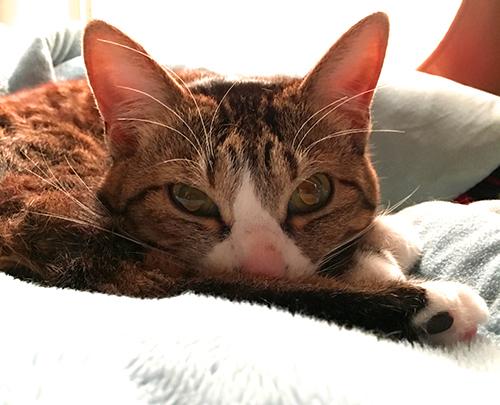 猫よりもまだ深く、猫がくれたグッドライフ…猫ライターの週末新作映画情報にゃ!