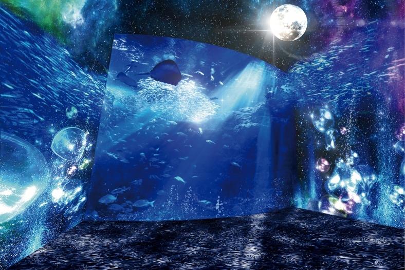夜の海を体感する神秘的な時空間、新江ノ島水族館で夜間スペシャルイベント開催