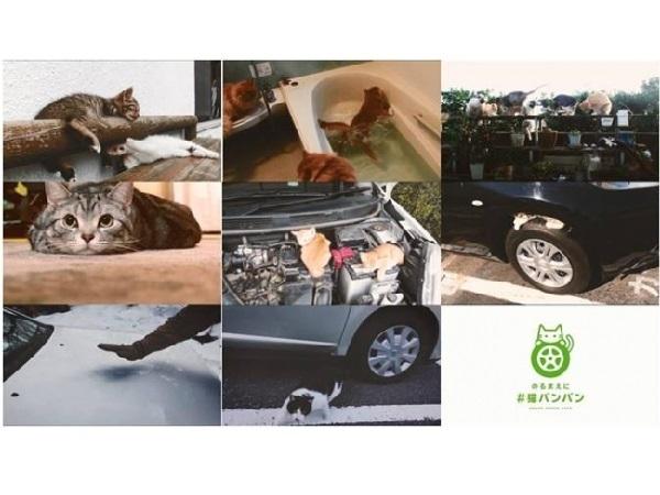 「#猫バンバン プロジェクト」第二弾、猫の習性やほっこり映像で、さらに「#猫バンバン」の大切さを感じてほしいニャー