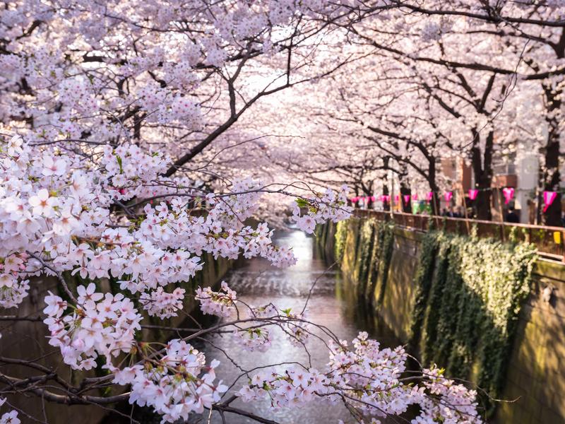 桜見たさで胸がきゅいきゅい。東京のお花見どこ行こう!