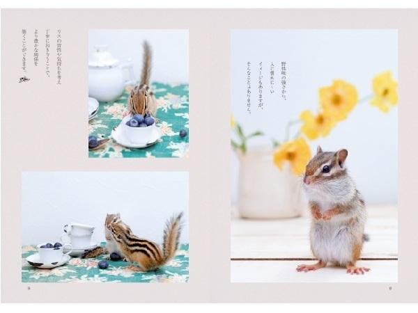 リスのお茶目でキュートな魅力を分かりやすく解説する、写真とイラストがいっぱいの飼育書