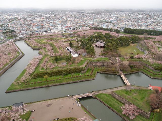 まだ間に合うところも!「一面桜の海」日本の絶景お花見スポットTOP5