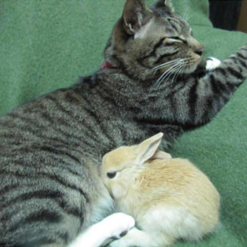 【激カワ限定!】筆者が選ぶ萌え死に寸前な「ウサギと猫」ランキング!