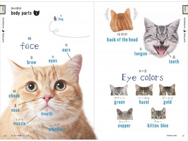 空前の猫ブーム到来!猫にまつわる単語と表現を集めた「ねこたん」片手に、猫の魅力を英語で語り合おう