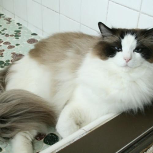 【真夏は要注意!】猫の熱中症を防ぐ効果的な方法と危険な症状ランキング!