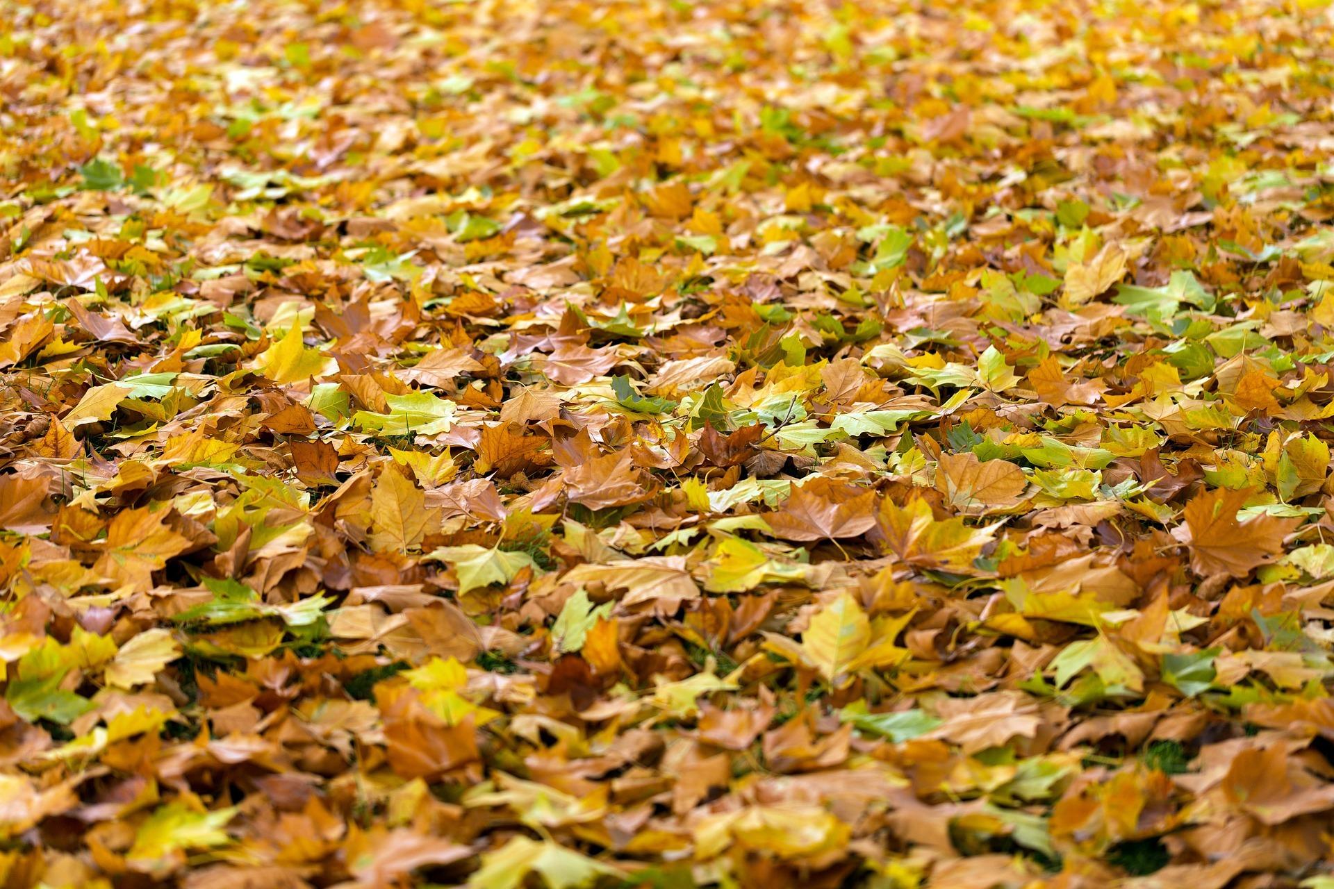 秋のデートプランはもう決まった?カレとの仲が深まる秋デート3選!