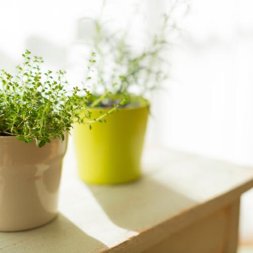 リビングに緑を!植物をオシャレに楽しむグッズ&コツ10選