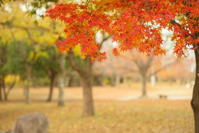 景色 秋のニュース画像