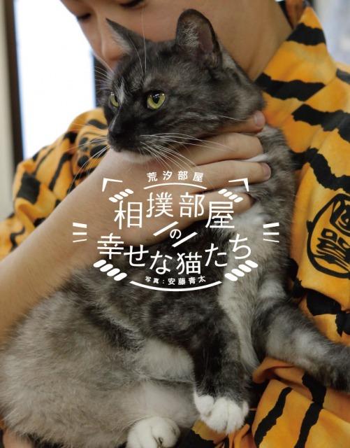 猫のニュース画像