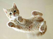 猫好きにはたまらない可愛さ♡「猫ネイル」デザインをご紹介