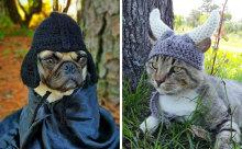 ダース・ベイダーやジョーズも!犬&猫用の手作り帽子がかわいい