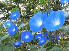 季節の花をネイルで楽しもう!秋にも咲いてる朝顔に、ひまわり、コスモスも