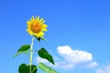 思いっきり夏を楽しみたい!ひまわり・ヨーヨー・スイカの3つのアイテムで夏を満喫しよう
