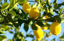 夏にピッタリ♪レモン柄ネイルのセルフネイル動画&デザイン画像まとめ