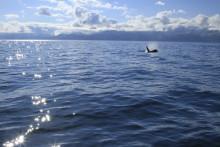 この夏は海モチーフのドロップネイルに注目!ブルーとピンクどっちにする?