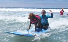 """ハンディキャップのある人々を癒やす""""サーフィン犬""""が感動的"""