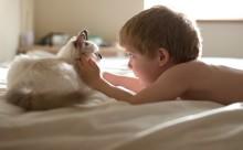 """まるで天使!""""猫と男の子""""の友情を捉えたフォト作品が可愛すぎる"""