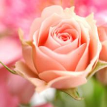 上品ゴージャスな花の女王様♪ 女性らしい手もとを演出する【ローズモチーフ】ネイル特集
