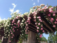 初夏にふさわしい華やかさを足もとに♪【ローズモチーフ】フットネイル集