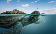ガラパゴス諸島が大きなカメだった?大自然と動物の魅力を表現したアート作品