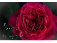 """ギフトにもおすすめ!厳選された""""究極の花""""のみを届ける新サービス第1弾は究極のバラを産地直送"""