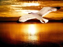 自由に飛ぶ翼を爪先に宿したい!キュート&アートなバードネイルデザイン