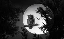 お部屋のアクセントに!動物たちが満月に浮かび上がる時計がかわいい