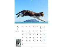 365日ずっと一緒!大ヒット写真集「飛び猫」と「フクとマリモ」がカレンダーに!