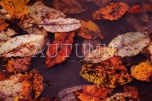Autumn!ハロウィンは終わったけど、クリスマスにはまだ早いこの時期にオススメの秋ネイル特集☆