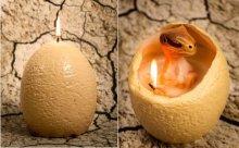 """卵から恐竜の赤ちゃん!?嬉しい驚きが詰まった""""秘密のキャンドル""""が可愛い"""