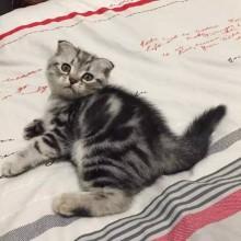 【ネコ好き必見!!!】かわいすぎる♡ネコ柄ネイルデザインまとめ♡