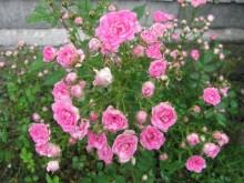 セルフネイルで簡単に出来る!お花の種類別で、書き方とデザイン紹介しちゃいます♡