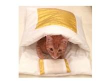 バレンタイン&猫の日の準備してる?フェリシモ猫部のお店が有楽町・新宿・渋谷に登場にゃん!