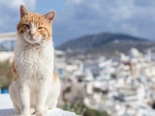 世界おネコさまの旅。どこへ行きたい?
