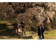 """【あと1カ月!】さくらの咲くころ行きたい、""""さくら""""関連イベント3選"""