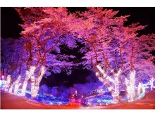 艶やかな夜桜、さがみ湖イルミリオンで関東最大級の豪華な光と桜の饗宴を満喫しない?