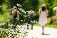 春は体も痩せやすい? 効率的なダイエット方法とは