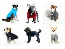 無料&先着順!日本最大級のペットイベントにて、新進気鋭のフォトグラファーに愛犬を撮影してもらわない?