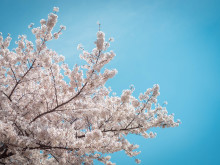 満開! 東京の桜を満喫する #まとめ