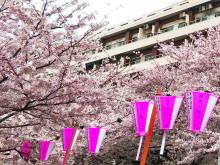 お花見ラストスパートは目黒川で。スマートな桜コーデ