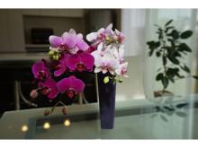 フレッシュな胡蝶蘭の切り花が産地直送で届く!お母さんと一緒にアレンジを楽しむ、素敵な母の日の過ごし方
