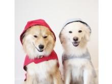 着脱5秒、愛犬が雨の日のお散歩にリクエストしたくなる?!画期的な犬用レインコートが登場