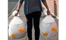 「その金魚どうしたの!?」思わず二度見してしまうデザインごみ袋