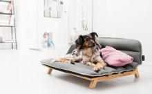 ペットも大事な家族だから♡ワンコ専用ソファが快適そう